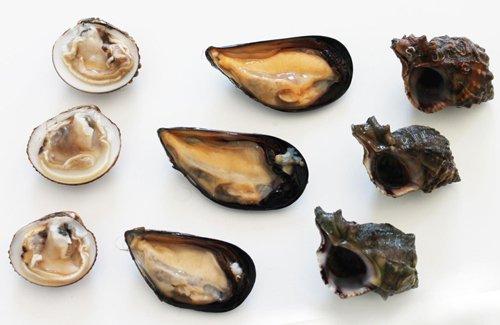 frutti di mare crudi