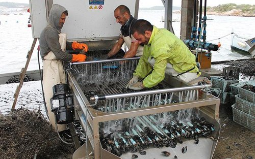 pescatori che puliscono delle le cozze