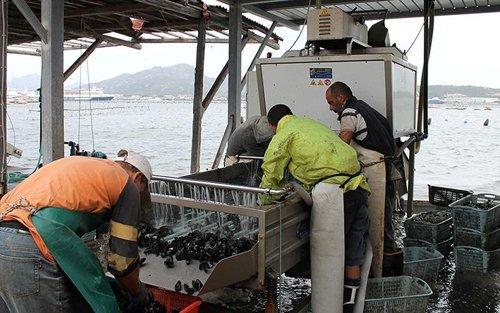 pescatori che puliscono delle cozze al mare-vista frontale