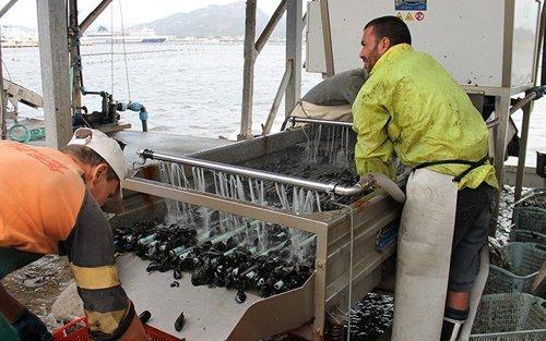 pescatori durante lavoro al mare