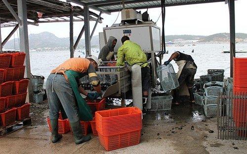 pescatori che puliscono delle le cozze al mare