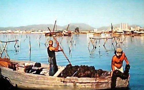 pescatori sulla barca raccolgono cozze