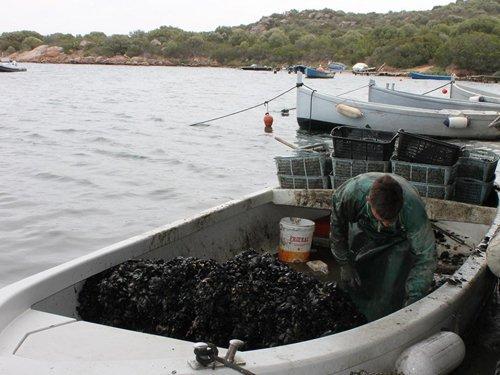 vendita di lotti di cozze al mare con barche
