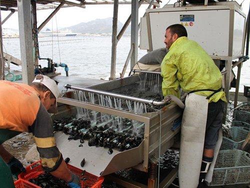 pescatori che puliscono delle cozze-vista laterale