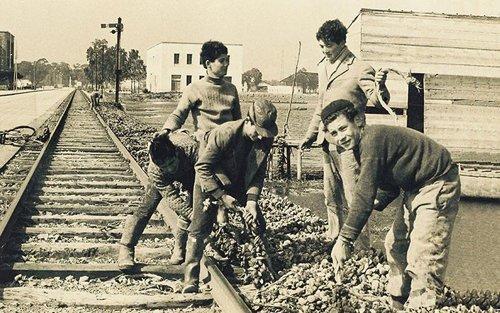 ragazzi raccolgono delle cozze