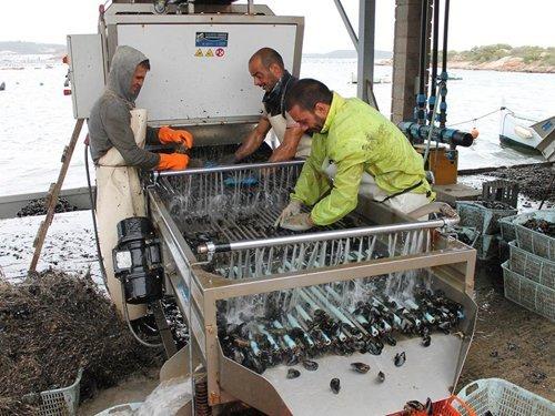 pescatori che puliscono delle cozze al mare-vista laterale