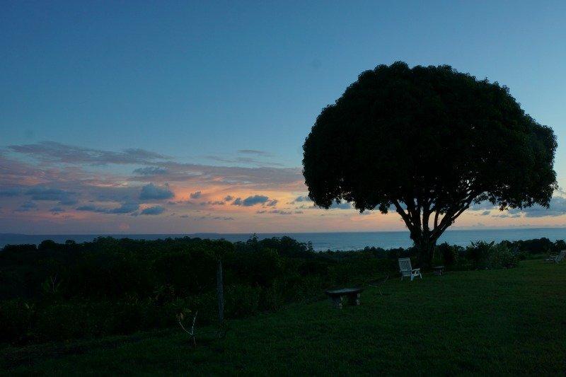 Mango tree at the Lookout at Playa Tortuga