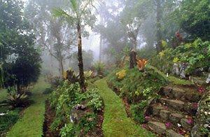 Botanical Gardens in San Vito, Costa Rica