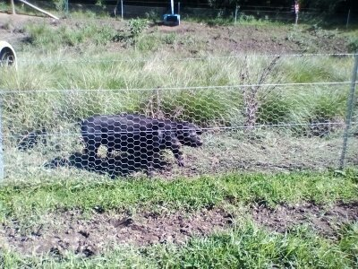 animals standing by chain fence