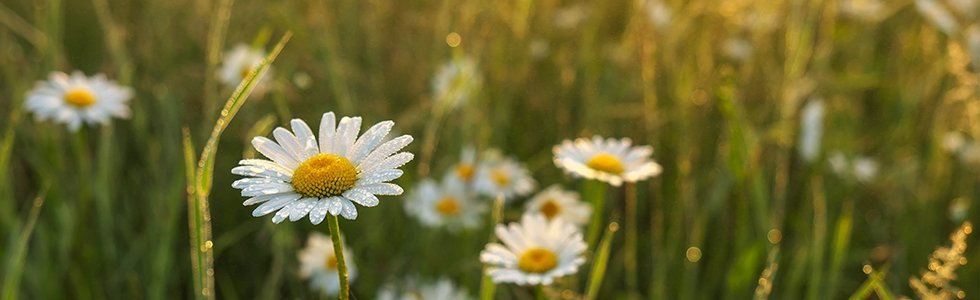 addobbi floreali sarezzano