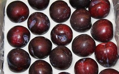 wholesale plums