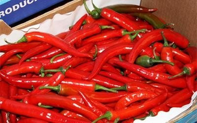 Mexican chilli peppers