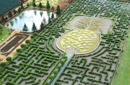 Large pineapple shaped maze in Oahu