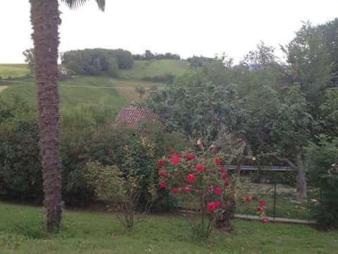 un giardino con delle piante e dei fiori rossi