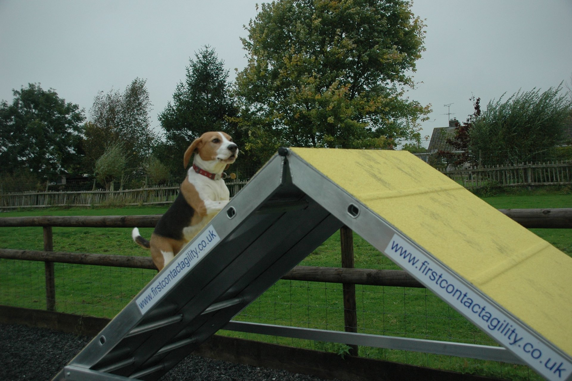 Dog training classes for obedience & dog agility