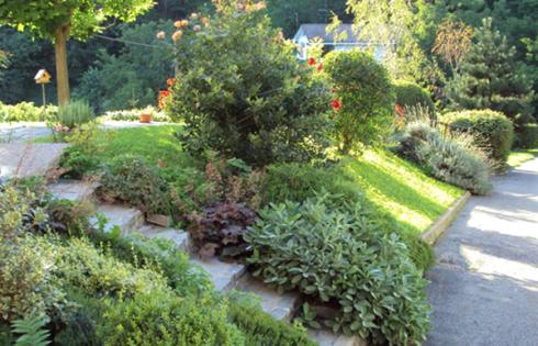 Una strada e sulla sinistra delle piante grasse e dei cespugli