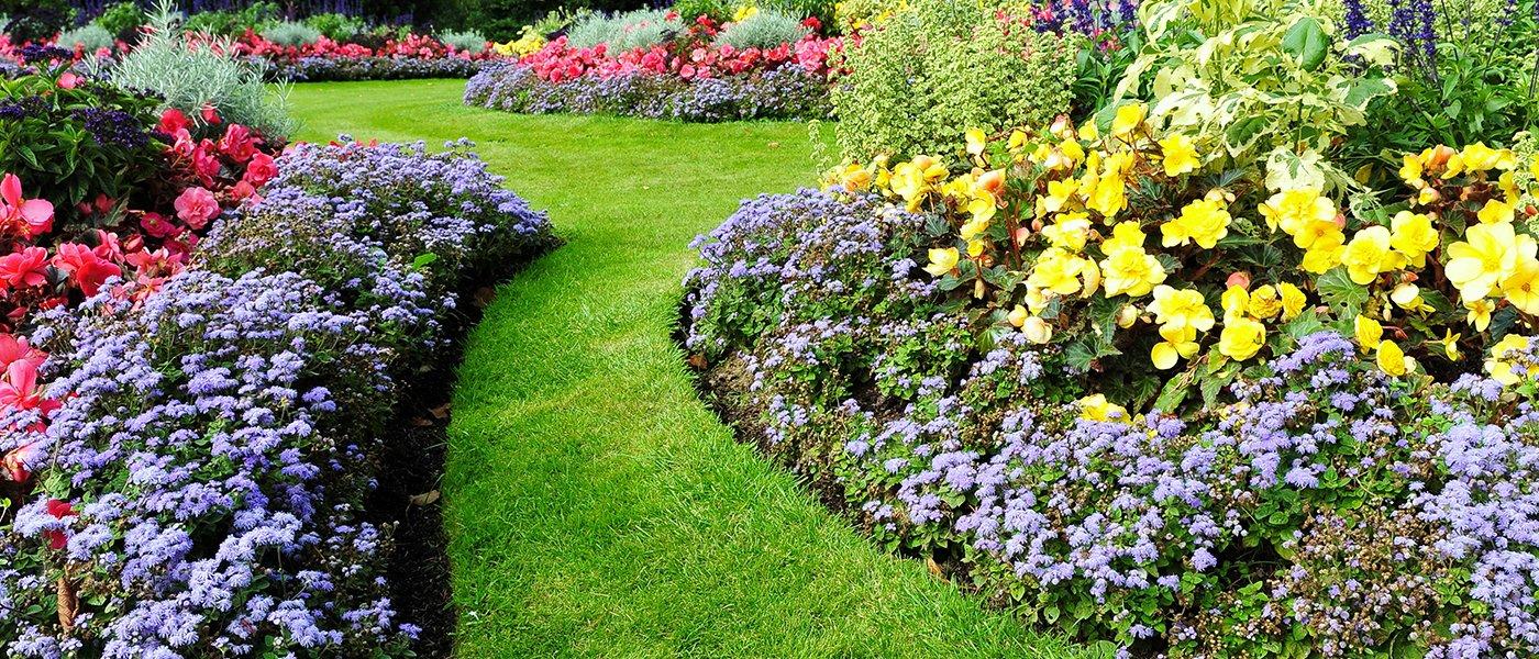 Un giardino con dei fiori di vari colori