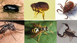 Trattamenti anti-insetto