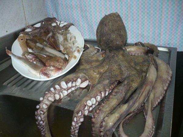 Un polpi enorme e nel piatto, pulpito,pesce e calamaro