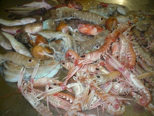 Calamari,scampi,gamberetti e buccini
