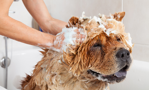 Lavaggio cani alla toelettatura