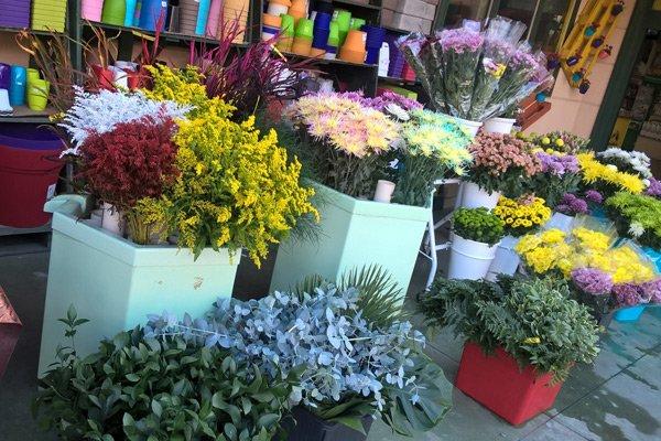 Composizioni floreali della agrisistem