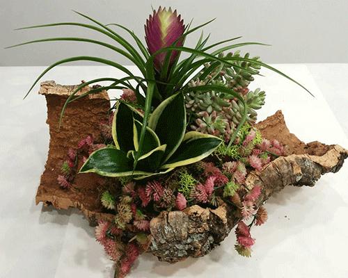 Composizione di pianta su corteccia