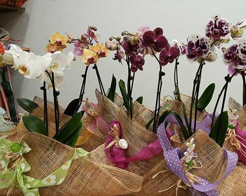 orchidee, avvolti in tela di juta e legami di colori