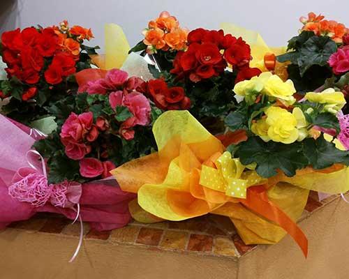 Piccoli mazzolini di fiori di vari colori