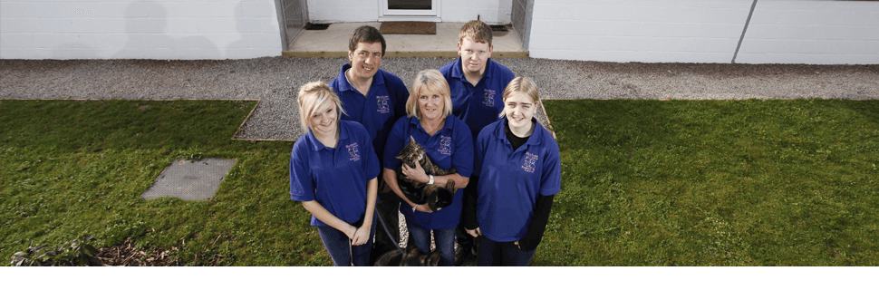 Cattery - Gloucester, Gloucestershire - BJ Boarding Kennels & Cattery - Cattery and kennel