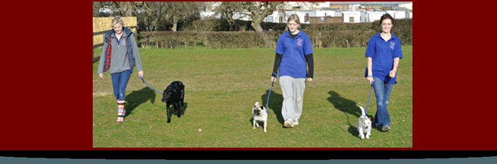 Dog boarding - Gloucester, Gloucestershire - BJ Boarding Kennels & Cattery - Kennels