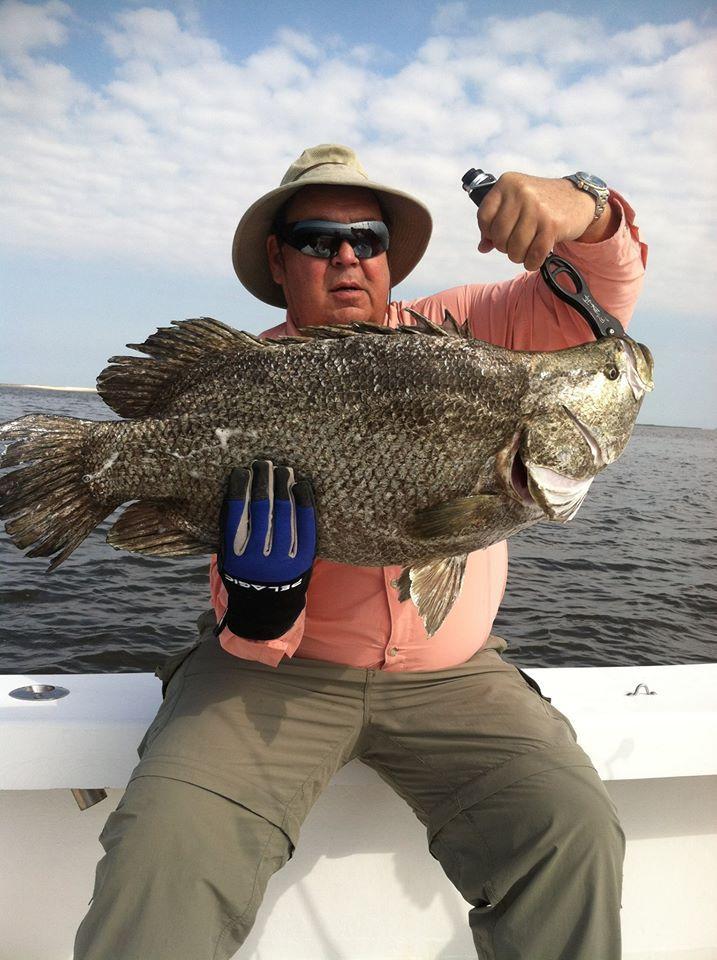 tripletail fishing