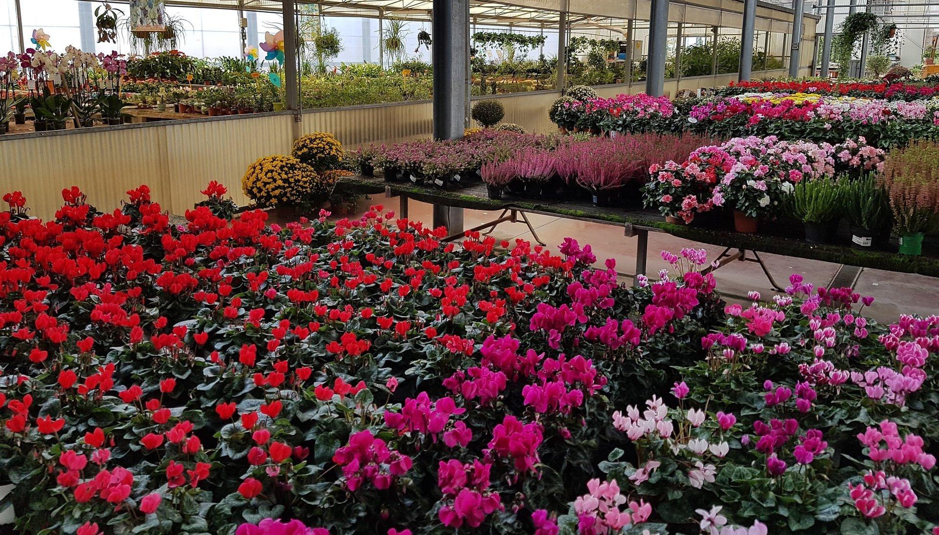 Piccole piante degli fiori bianchi, rossi e rosa