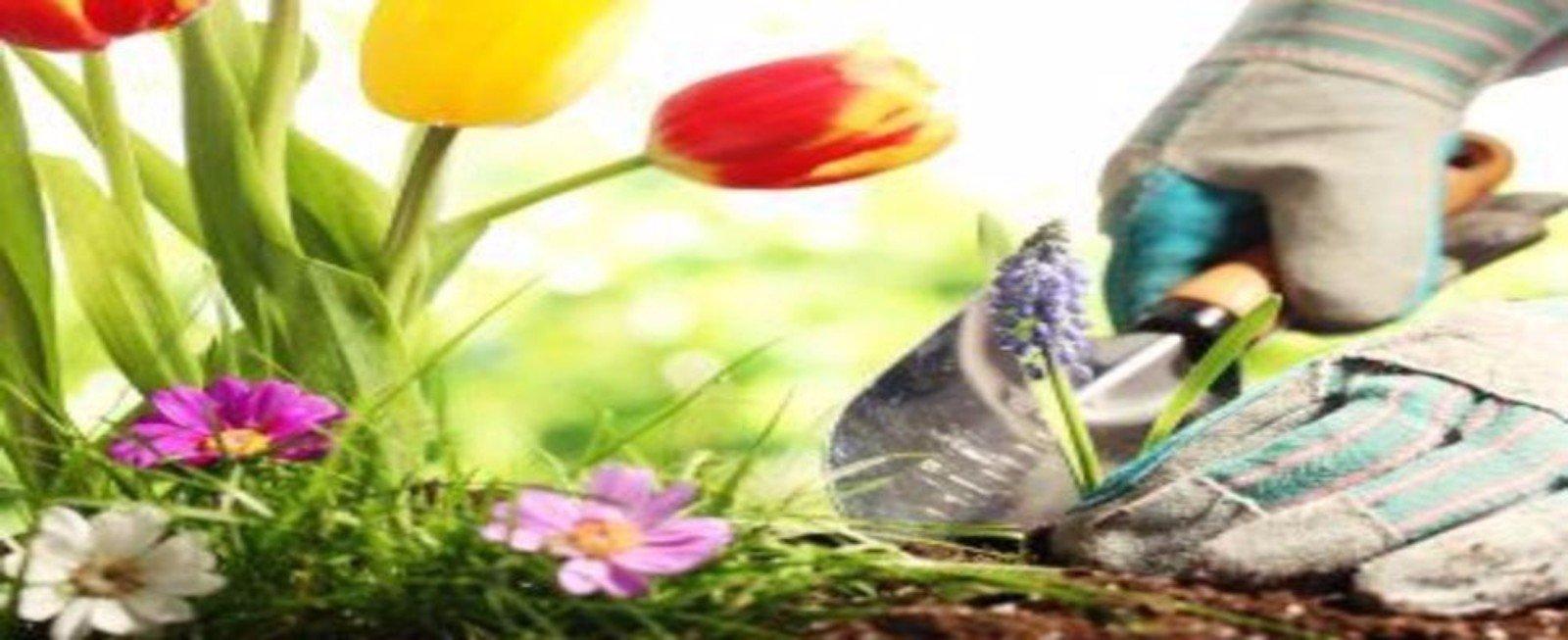 mani con guanti piantando fiori