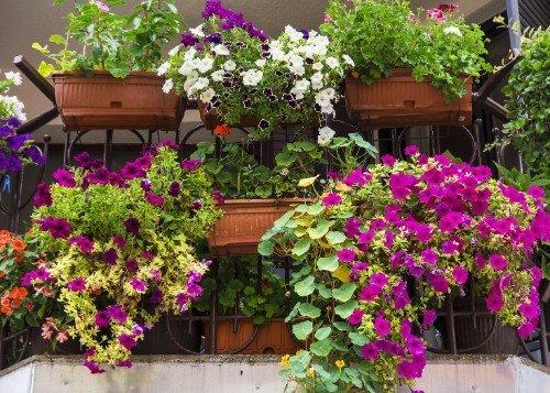 Corrimano di scala pieno di vasi da fiori