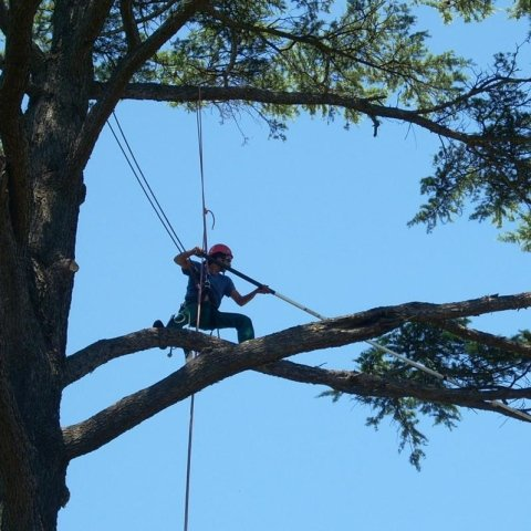 potatura in arrampicata