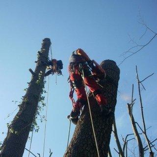 abbattimento alberi a fune