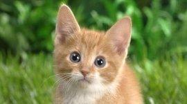 Gatti, accessori per gatti, mangimi per gatti
