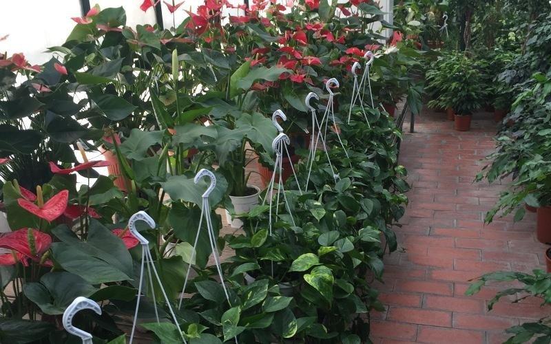 piante da giardino e interni