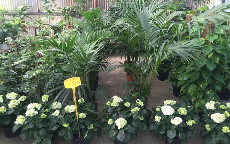assortimento di fiori e piante