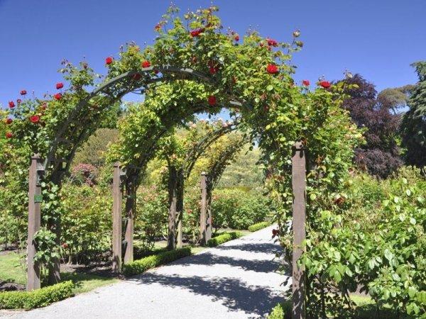 progettazione manutenzione giardini