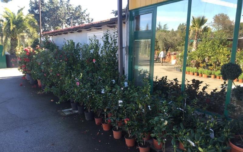 giardini e piante Roma