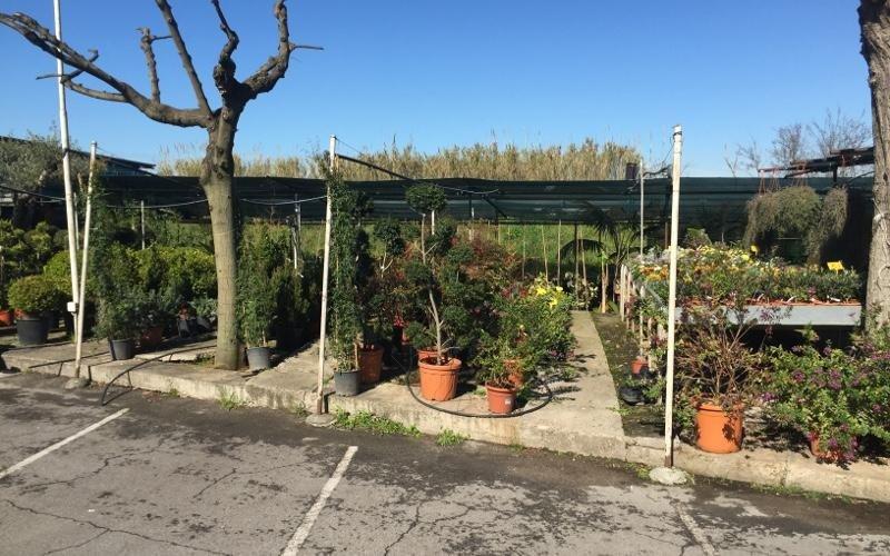 vendita piante Roma