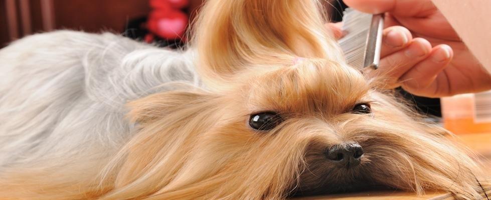 toelettatura cani