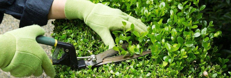 servizi, giardinaggio, potatura piante, disinfestazioni