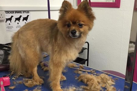 The Local Pet Groomers In Caerphilly And Cardiff