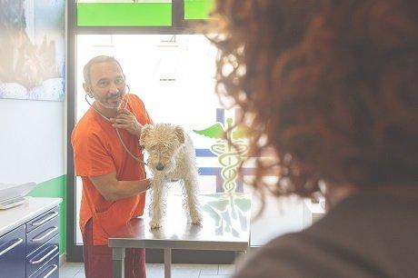 veterinario che visita un cane