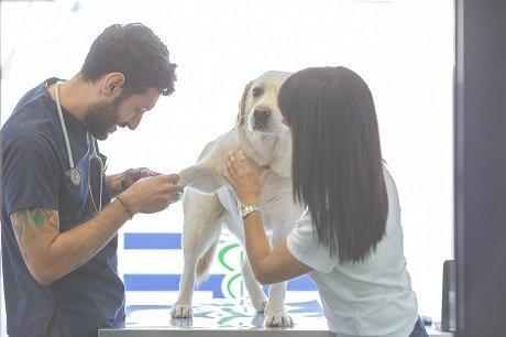 due persone che visitano un cane