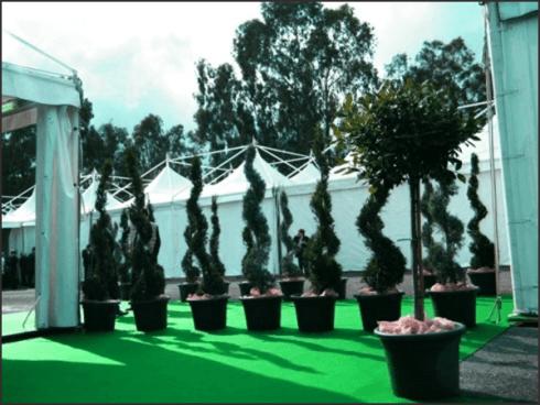 Etna Allestimenti allestisce spazi esterni con piante e verde