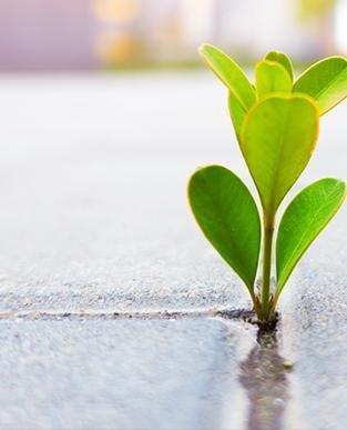 primo piano di una pianta
